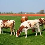 Dlaczego nie będzie mięsa z probówki (10 przyczyn)