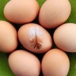 Wartości odżywcze białka i żółtka
