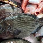 Tłuszcze omega-6 wypierają omega-3